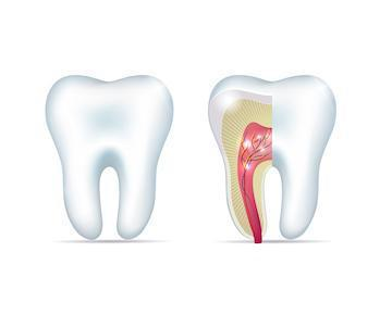 root canal diagram in tysons corner
