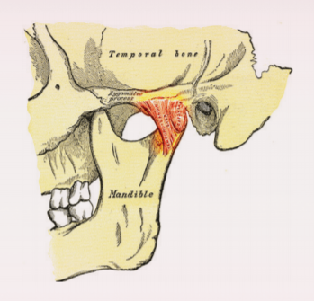 a diagram of a jaw joint | teeth whitening in vienna, va